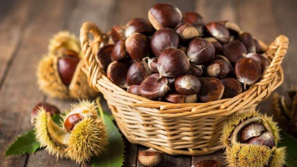 Le châtaigne, un fruit oléagineux bon pour la santé.