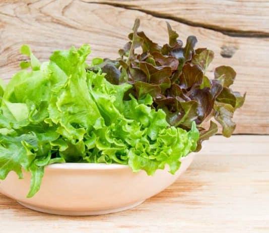 variétés de salades laitue