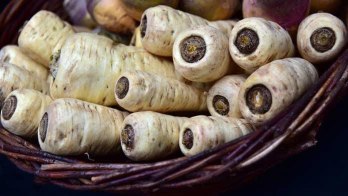 panais légumes racines