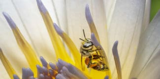bienfaits des produits de la ruche
